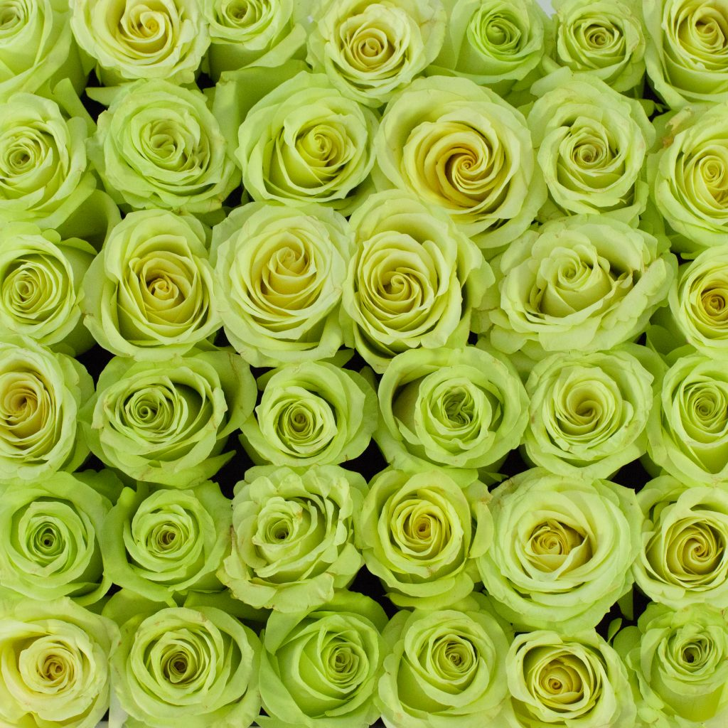 Flowers for Wimbledon florist larry walshe london green lemonade roses