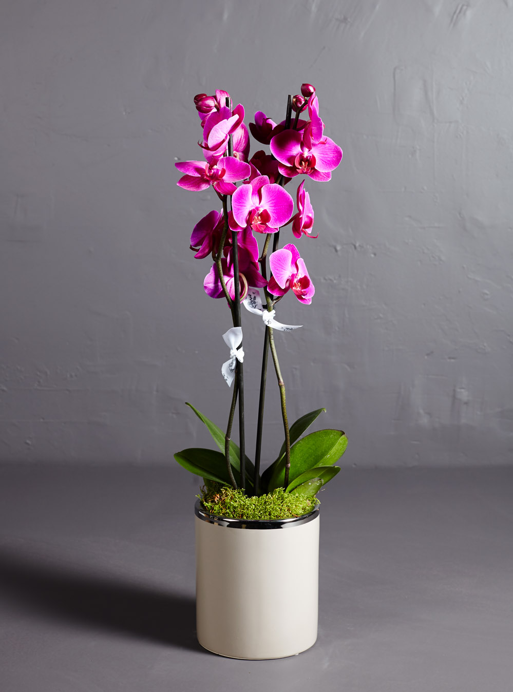 Pink Phalaenopsis Orchid Larry Walshe Floral Design