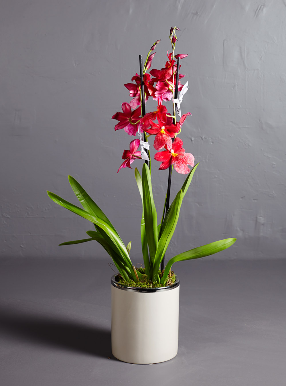 Red Oncidium Orchid Larry Walshe Floral Design