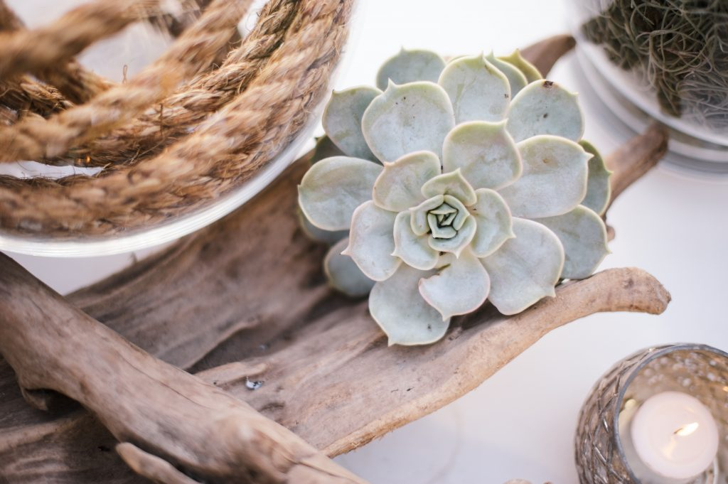 algarve beach wedding larry walshe succulent sand 2
