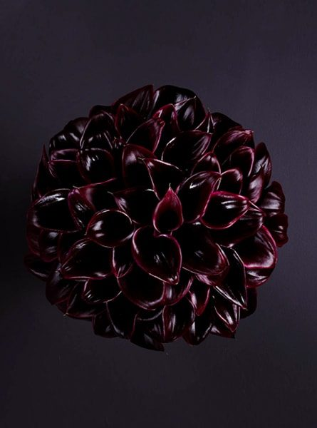 black_calla_heaven_larry_walshe_luxury_london_bouquet