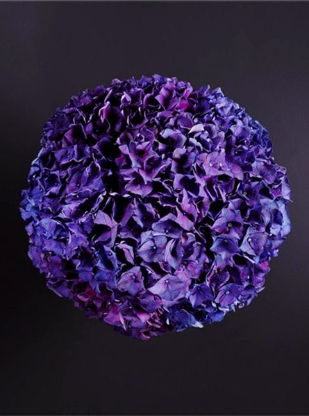 perfect_purple_hydrangea_bouquet_larry_walshe_luxury_london_delivery