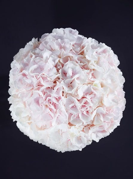 perfect_blush_hydrangea_bouquet_larry_walshe_luxury_london_delivery